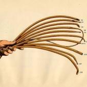Vom Lauchblatt zum Latex und zur Entwicklung des Katheters